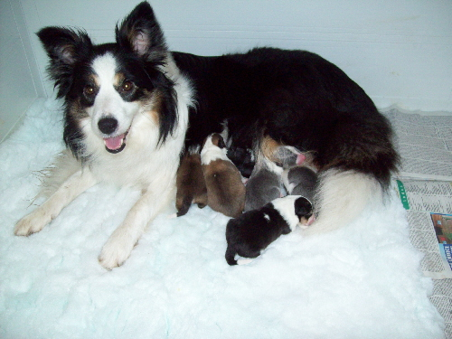 Fleck & pups (2 days old)